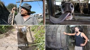 Volti, luoghi e storie dei contadini dell'isola d'Ischia.
