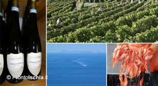 L'acqua, la terra, il vino e i sapori dell'isola d'Ischia.