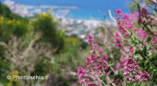 Aspettando l'estate, Ischia si fa bella in primavera.